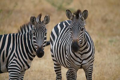 Tarangire National Park, Tanzania