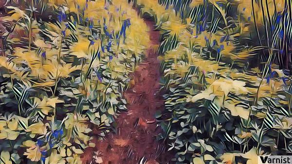 Path to Nesika