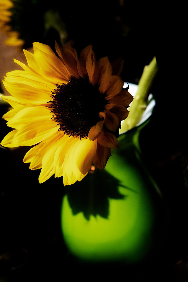 Sunflowers in the window.... I always have trouble with harsh widow light. But I liked the shadows because of it.. :) <br /> <br /> Day 60 of 365<br /> 03-01-2013