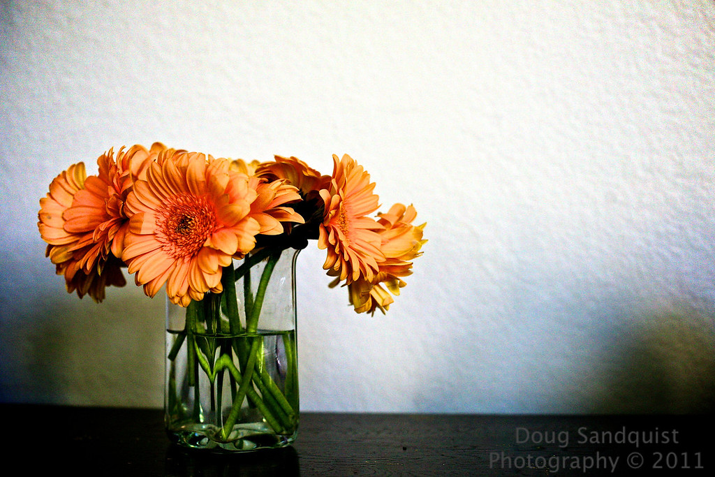 "These gerber daisies are hanging in there.. I took a picture of them last Sunday, which you can see <a href=""http://www.sandquistphotography.com/Photography/Photo-A-Day-2011/15292273_FHUaJ#1186699775_NcLLv"">Here</a> This is a bit of a different feel... I had a little bit of fun in PP...  Glad the weekend is here!   02-18-2011"
