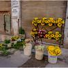 Cuba Havana Centro Havana Flower Seller 5 March 2017