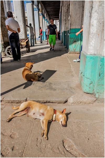 Cuba Havana Centro Havana Two Dogs March 2017