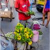 Cuba Havana Centro Havana Flower Seller 1 March 2017