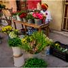 Cuba Havana Centro Havana Flower Seller 2 March 2017