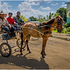 95 Cuba Western Province Three men, a Horse and a Cart March 2017