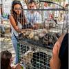 Cuba Havana Old Havana Dog Vendor March 2017