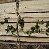 SAJ0474 Gynostemma pentaphyllum