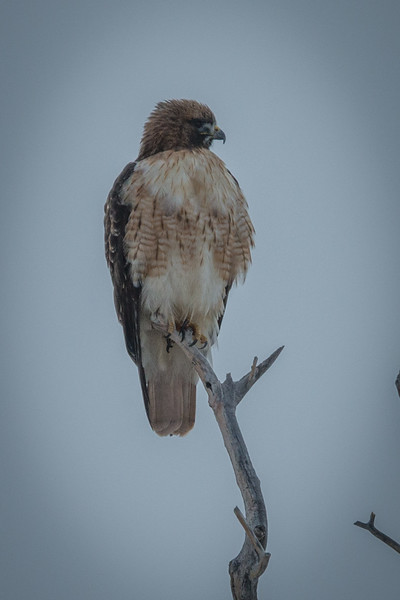 There is an abundance of wildlife in the dunes, though we only saw this hawk.