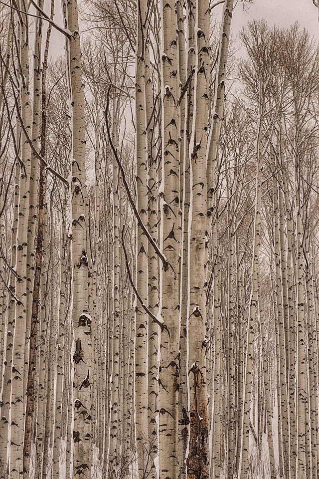 The fresh snow amidst the aspen at the top of McClure Pass compelled me to stop and take a moment to consider its beauty.