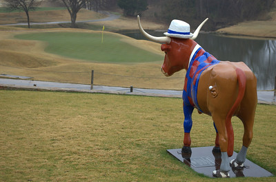 "January 27, 2009 - ""Longhorn Golfer"" –Yesterday, on a cold damp day, this lonely longhorn steer was captured longing for the links.  He is ready to tee off, with his golf shoes on and golf balls in his hip pocket."