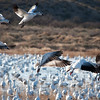 "December 10, 2011 - ""Birds, Birds, Birds""<br /> <br /> Now where is that landing zone?<br /> <br /> (full screen viewing recommended)"