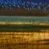 "December 7, 2011 - ""Taking Flight""<br /> <br /> Sunrise ""blast off"" at Bosque Del Apache last Friday."