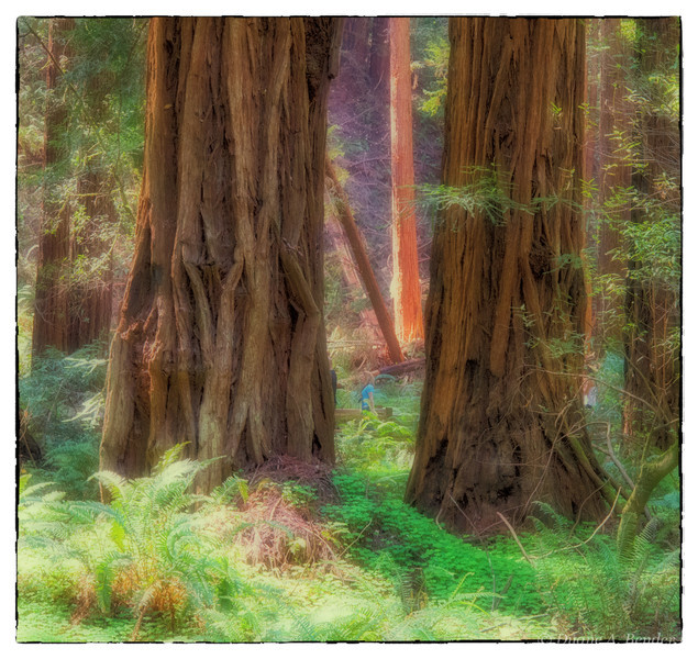 """April 20, 2013 - """"Lost On The Redwoods""""<br /> <br /> The size of the Redwoods miniaturize the people in the Muir Woods."""
