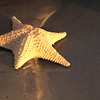 "December 9, 2009 - ""Sun Kissed Starfish""<br /> <br /> The rewards of getting up very early."