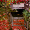 "December 1, 2009 - ""Deck Reflections""<br /> <br /> This is another shot from the Japanese Garden in Ft. Worth. I find it interesting that a better view of the deck was available in the reflection versus what I could see directly from my perspective.  The Koi under the deck are not reflections :)<br /> <br /> I used the Adobe Elements Raw Editor for most of the pictures in my gallery from the gardens.  This shot was cropped and exposure/saturation/vivid slides moved a touch along with a pre-sharpening filter.  The gallery of shots from Sundays session is at<br /> <br />  <a href=""http://dakotacowboy.smugmug.com/Travel/Texas/Ft-Worth-Japanese-Garden/10491545_BjYrp/1/728088305_oab8o"">http://dakotacowboy.smugmug.com/Travel/Texas/Ft-Worth-Japanese-Garden/10491545_BjYrp/1/728088305_oab8o</a><br /> <br /> I had not used the Raw Editor much before, but found it a very fast way to process most of these shots with results that I liked."