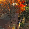 """December 21, 2010 - """"A Ride In The Park""""<br /> <br /> I shot this yesterday from my son's apartment window, while I was waiting for the cable guy.  Going back again today because of a scheduling misfire yesterday!"""
