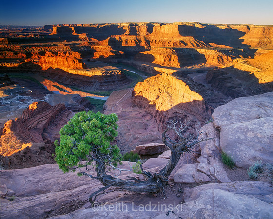 dead horse point and juniper, sunrise, utah