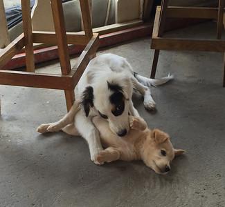 Panada and New Puppy @ Deja Brew