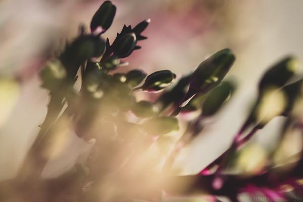Flowering Dreams