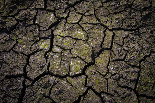 Drought #7: Cracked earth