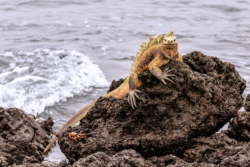 Marine Dragon