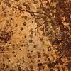Conn5440 Elaeocarpus