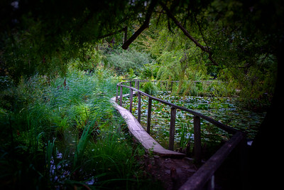 Pathway In The Botanical Garden