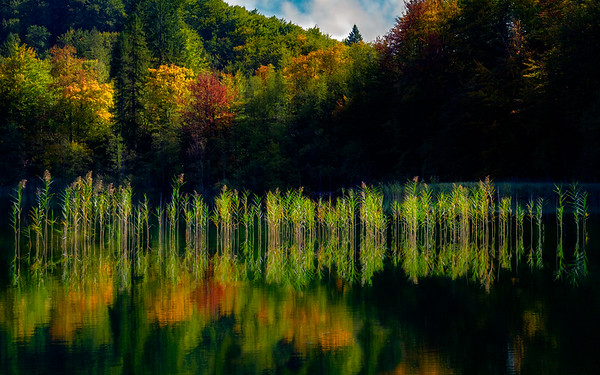 Reflections Of Colors