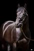 FLORIDA HORSE '08 :