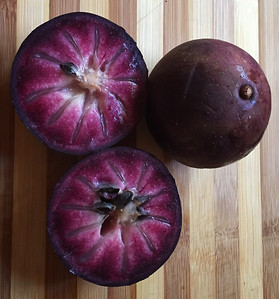 star apple caimito