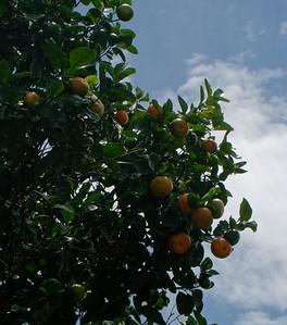 manderines