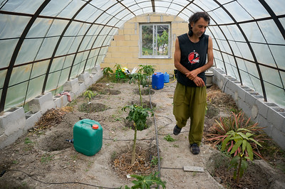 Placido in his greenhouse of mangoes near Granada, Spain