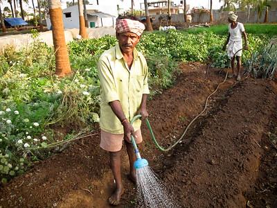 Goal waters fresh seed beds at Annadana Farm.
