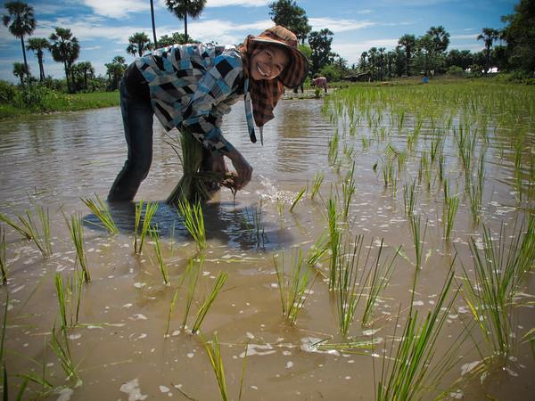 Transplanting rice seedlings on Rady's land near Siem Reap, Cambodia