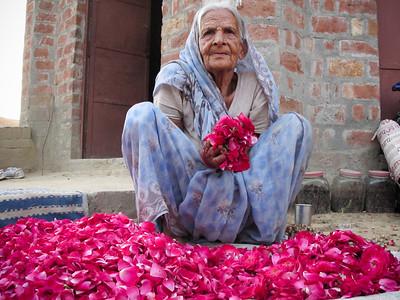 Rahdebaba's mother sorts dried rose petals in Rajpur, Northwest Uttar Pradesh, India