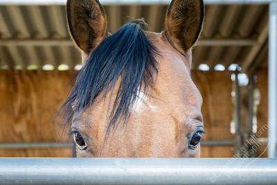 High Desert - Justin the horse