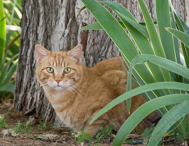High Desert - Creampuff the cat