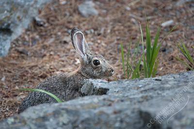 Devil's Tower National Monument - rabbit