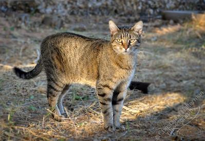 High Desert - Dolly the cat
