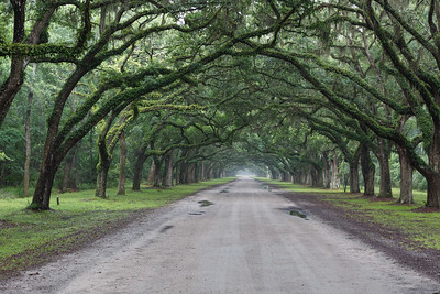 Wormsloe Plantation-6949