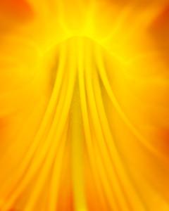 Backlit Yellow-8389