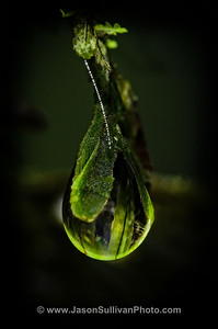 Rainforest Droplet