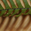 SAJ0533