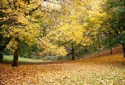 Autumn Colors - Washington Park, Oregon