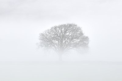 Devon Fog VII