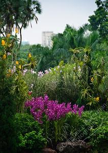Singapore Botanic Gardens, Orchid Garden - gardenscape