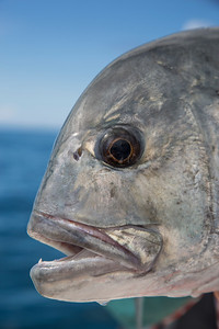 Expeditionary fishing trip to Samoa with Australian angler Jonathan Jones for mahi-mahi, giant trevally, and other species. Shot for YETI Coolers.