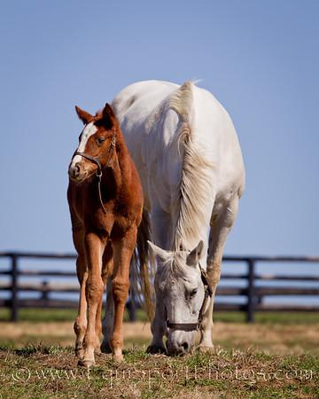 11_0312_Foals_mw-4711