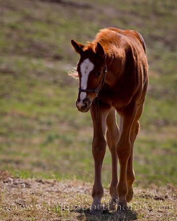 11_0312_Foals_mw-4796