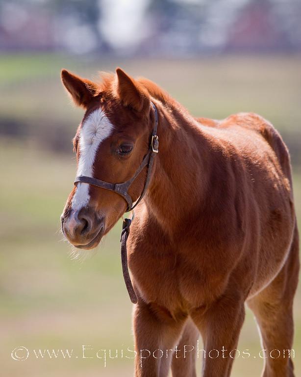 Foals '11